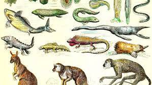 Charles Darwin'in Eğitim Hayatı